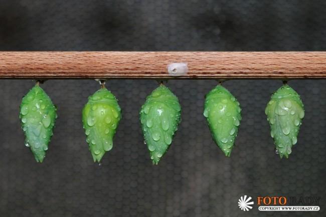 vystava-tropickych-motylu-2011-05